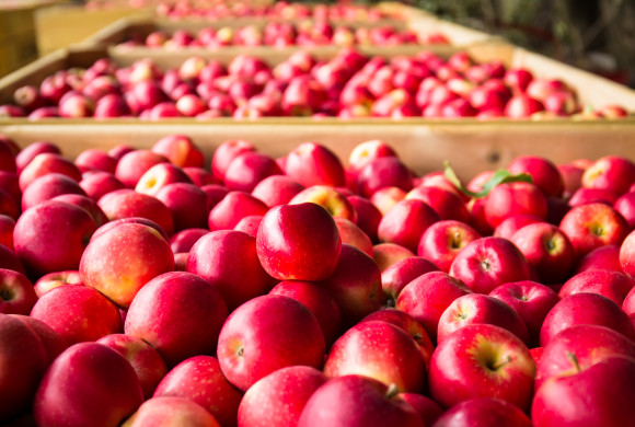 Growing Demand for New Zealand Organic Apples in Asia