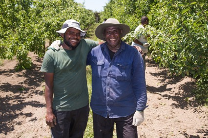 First Seasonal Workers Swing into Action in New Zealand Orchards