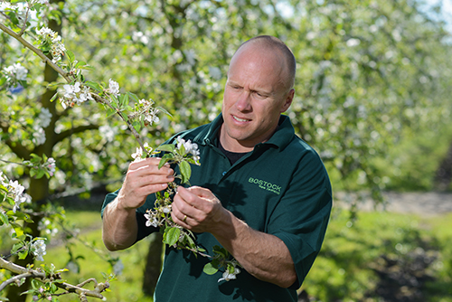 Record Blossoms set New Zealand up for a High Quality Apple Crop