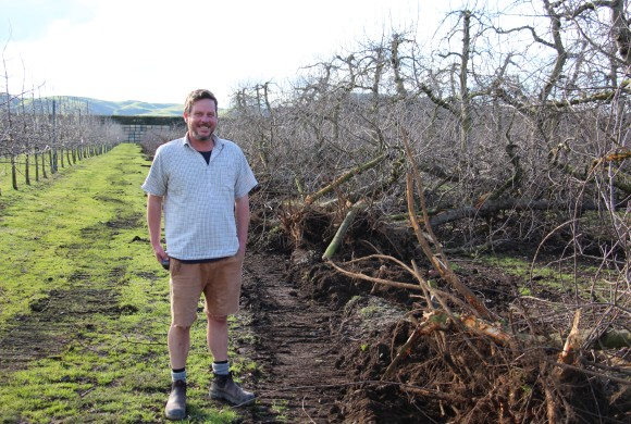 Some of Hawke's Bay's Oldest Apple Trees Have Been Pulled Out