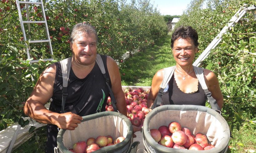 Iwi Leader Swaps Corporate Job to Pick Apples