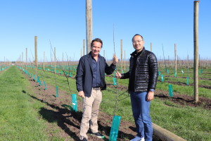 John Bostock and Loren Zhao - New Apple Tree Planting