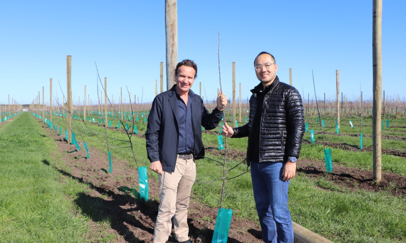 New Zealand's Largest Organic Apple Grower Planting New Varieties to Keep Up with Demand from Asia