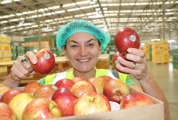 Hawke's Bay Apple Grower First in Southern Hemisphere to Use Compostable Apple Sticker